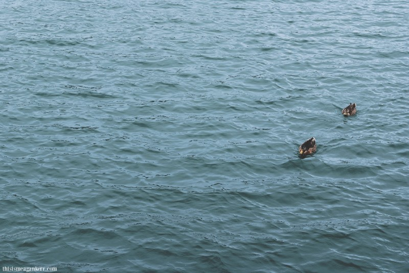 Oh, and I found some ducks.