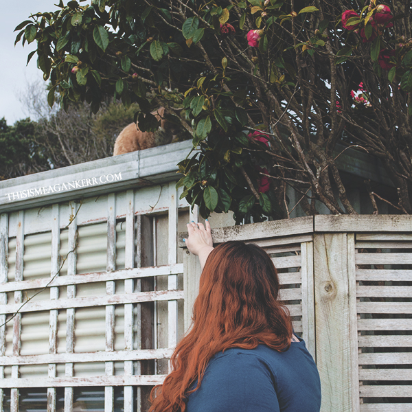 ginger cat on a roof
