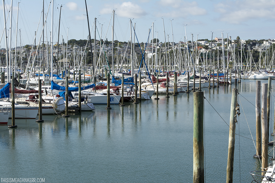 Boats moored at Westhaven Marina, Auckland Harbour