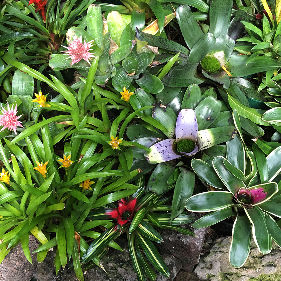 bromeliads at auckland winter garden nature pinterest